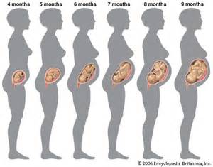 Water weight gain during pregnancy picture 5