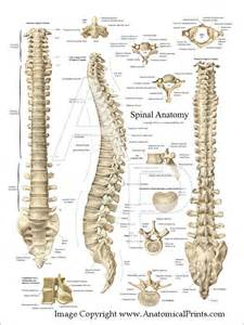 female anatomy pics picture 9