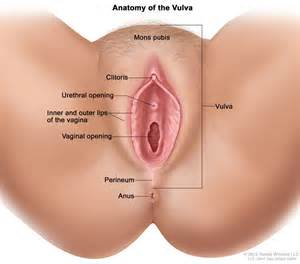 lumps in perineal area and severe yeast infection picture 19
