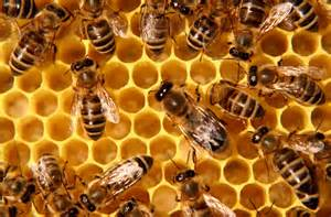 how to get honey from abee hive using picture 7