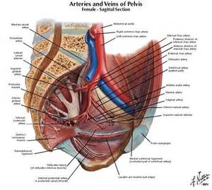 for pelvic muscle spasm picture 6