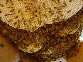 bee hives pictures picture 11