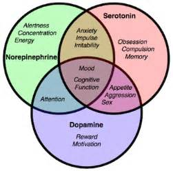 natural dopamine releasers picture 5