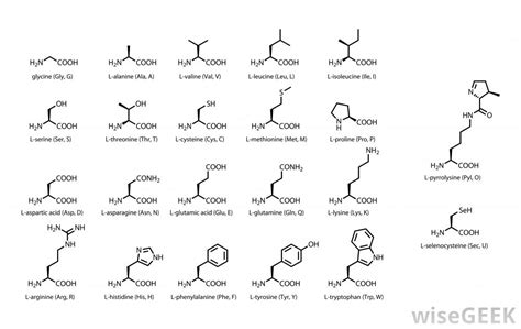amino acids in end stage liver disease picture 12