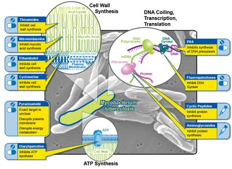 mechanism of actions of anti obesity drugs picture 14