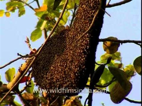 Natural Bee Hive picture 2