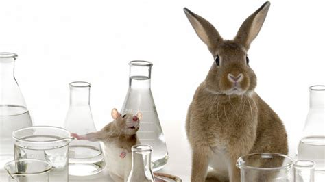 animal testing avon skin care laboratories picture 7