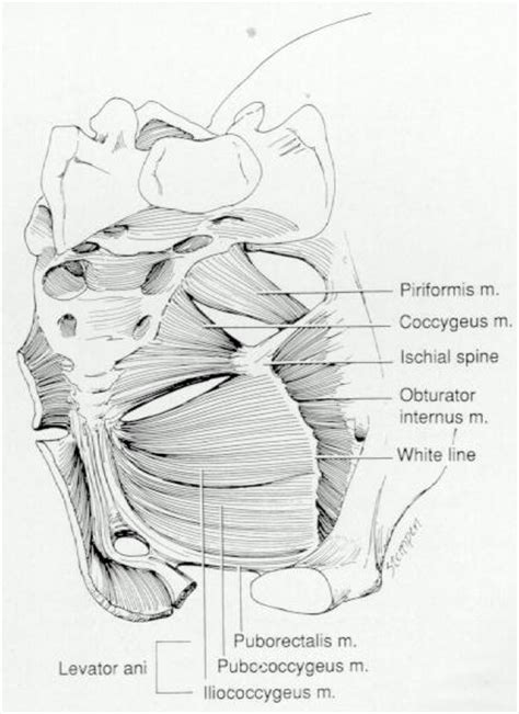 for pelvic muscle spasm picture 9