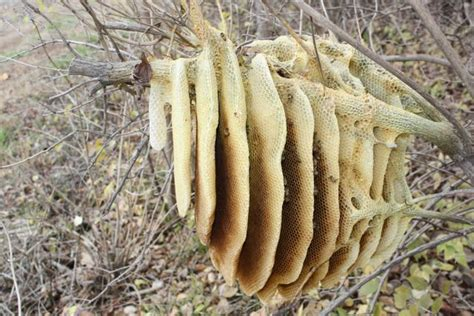 Natural Bee Hive picture 7