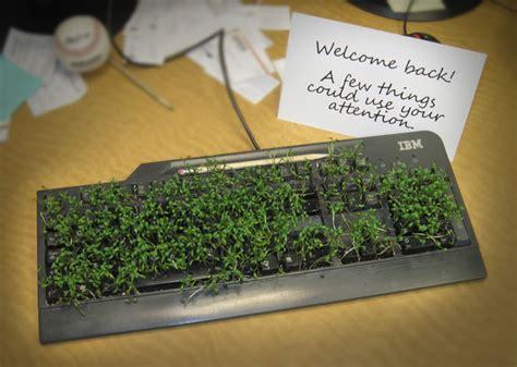 chia keyboard prank picture 1