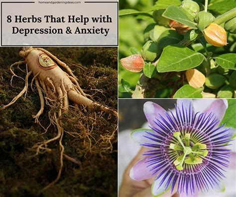 herbal depression native picture 3