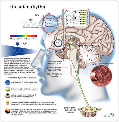 circadian rhythm sleep disorders picture 2
