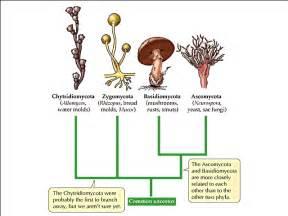 fungi classification picture 6
