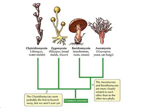 fungi classification picture 2