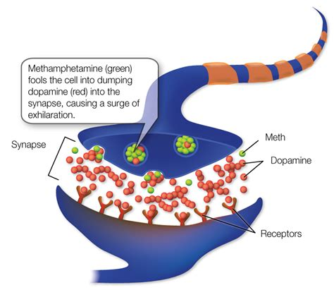 medicine that resets brain receptors picture 9