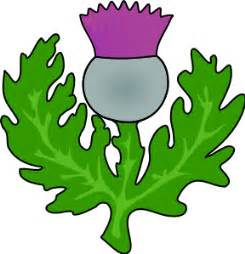 thistle graphics picture 5
