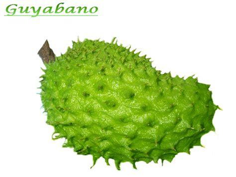 guyabano herbal picture 2