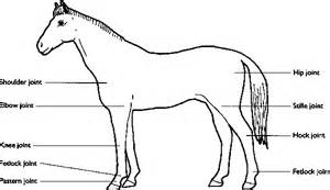 equine h problems picture 10