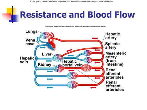 increased blood flow resistance to nodule picture 7