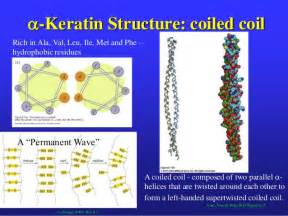 function of keratin picture 6