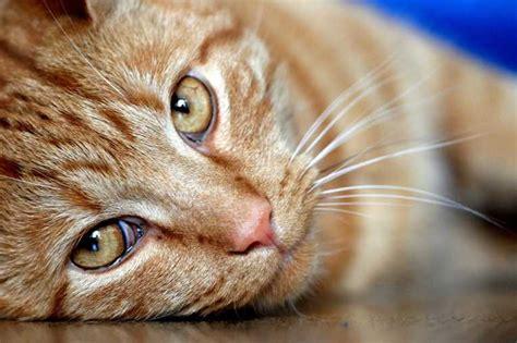 feline picture 9