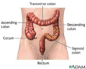 natural colon cleanse picture 6