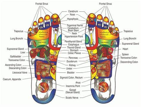 feeet reflexology and sexual arousal picture 14