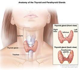 complex thyroid nodule statistics on cancer rate picture 6