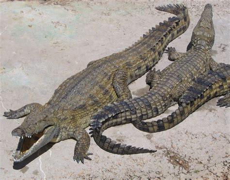 faux reptile skin s picture 9