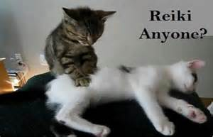 does resthyro work for cats picture 15