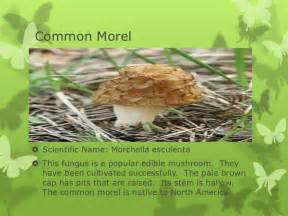 scientific names for fungi picture 7