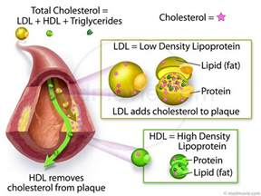 Cholesterol food ldl lower picture 10