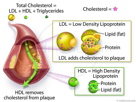 And cholesterol levels picture 2