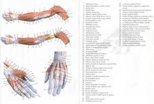 anatomy picture 7