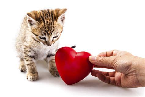 feline hyperthyroid heart murmur picture 14