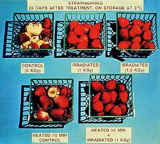 diet after radiation picture 11