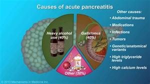 canine diet pancreais picture 10