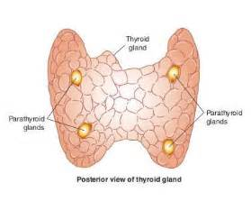 parathyroid disease and weight gain picture 2