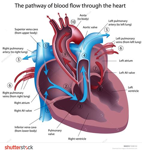 Blood flow path picture 4