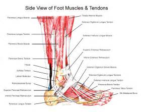 most common injuries to fifth metatarsal phalangeal joint picture 6