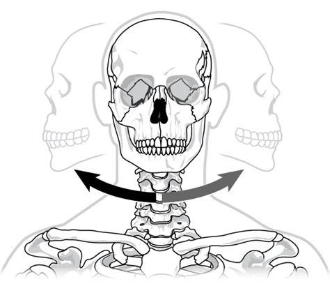 pivot joint skeleton human picture 2