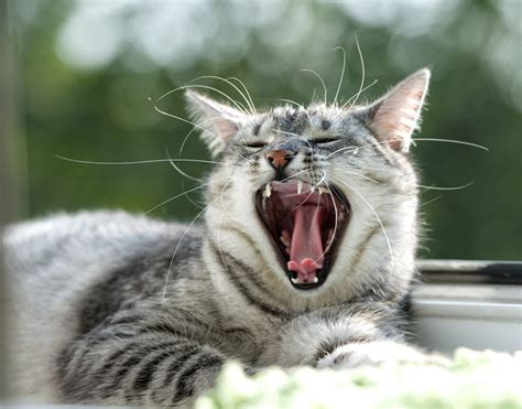 cat pictures showing claws and teeth picture 9