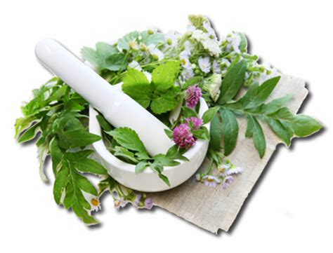 herbal therapy picture 1