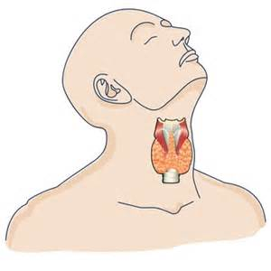 probiotic helps hyperthyroidism picture 6