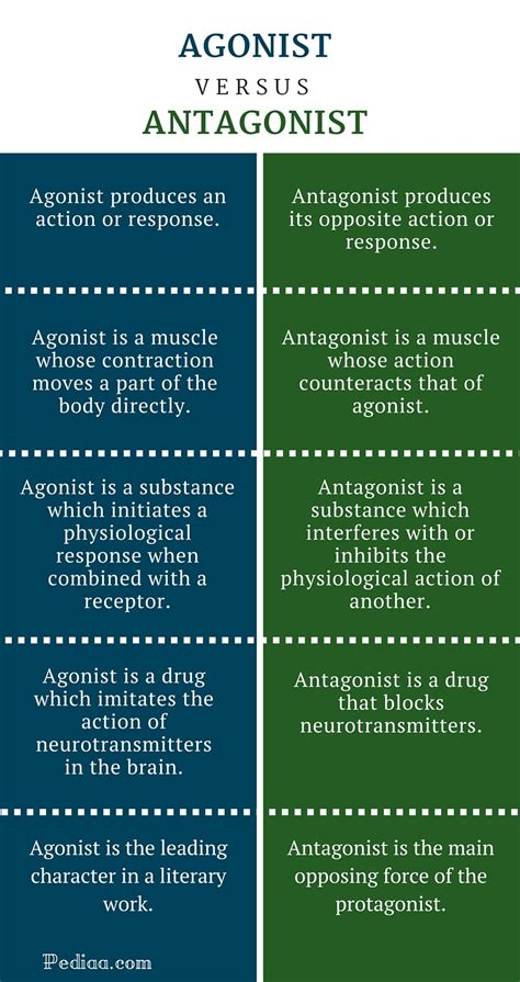 agonist and antagonist muscle picture 15
