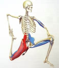 low back muscle psoais picture 7