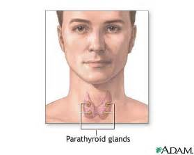 endocrinology parathyroid picture 2