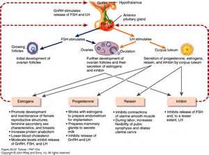 testosterone estrogen study picture 2