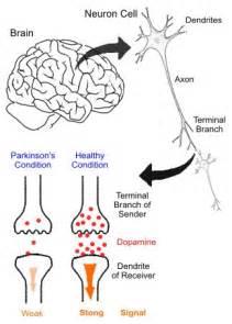 side effects of fertisure f picture 2
