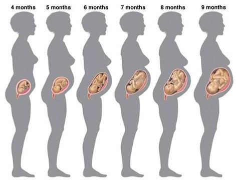 weight gain for ninth month of pregnancy picture 1